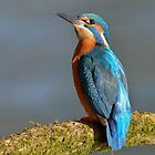 Kingfisher (Alcedo atthis) - III by Peter Wiggerman