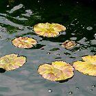 Serene Pond by ctheworld