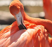 flamingo stylin by Alexandr Grichenko