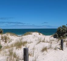 Reclaimed Sand Dunes & Coastal Plants. West Beach, Adelaide. S.A. by Rita Blom
