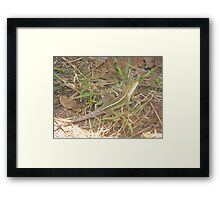Long Tail Framed Print