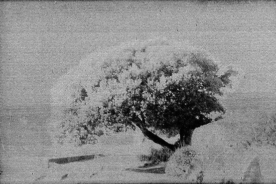 Tree of Knowledge by Gavin King