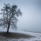 dark winter tree by peterwey
