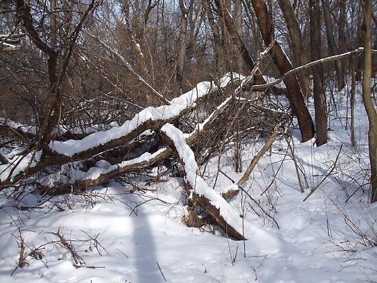 snow scene 3 by sianteri