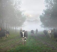 Country Morning by Igor Zenin