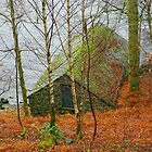 Old Boatshed by Harry Oldmeadow