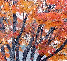 Autumn Palette, Bright by Harry Oldmeadow