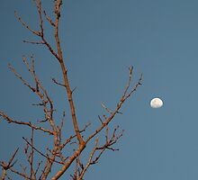 Tree Limb Moon~ by Cheyenne