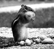 Chipmunk Black&White by TLWhite