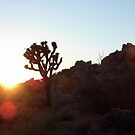 Joshua Tree Sunset by modernhiker