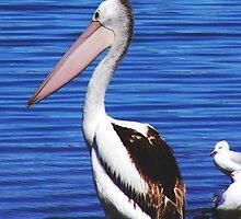 Proud Pelican by Rebecca Hansen
