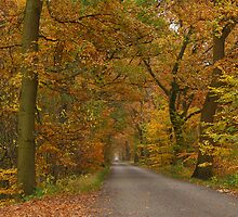 An autumnal country-road by jchanders