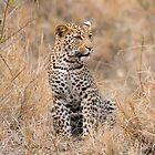 South African Safari by Erik Schlogl