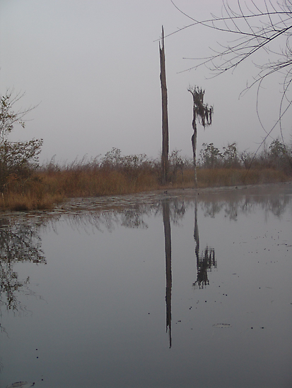 fog,Econfina Creek,wasp tree,cypress,swamp by May Lattanzio