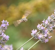 Humming Around the Lavender by Pamela Jayne Smith