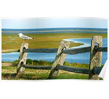 #495     Sea Bird Perched On Fence Poster