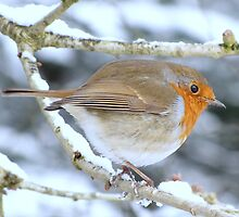 A Robin by Sharon Perrett