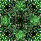 Kaleidoscope Peacock by Kathy Weaver