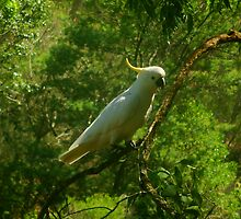 Australian Cockatoo high up in the trees by Phoenix-Appeal