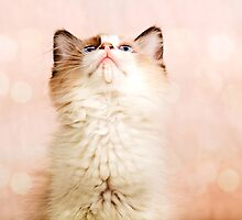 A Kittens Prayer by ╰⊰✿Sue✿⊱╮ Nueckel