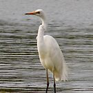 Standing Tall (Egret) by Sprinkla