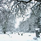 Snow in the Churchyard by Colin J Williams Photography