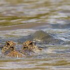 never smile at a crocodile by Overlander4WD