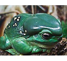 GREEN TREE FROG Photographic Print