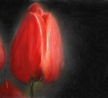 Wayne Everett Tulip by the Giving Rose charity