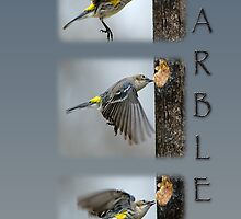 Warbler Collage by Bonnie T.  Barry