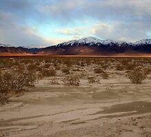 desert sunset by lexdenn