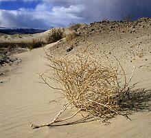 tumbleweed by lexdenn