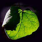 Green leaf by LisaRoberts