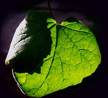 Green leaf by LisaRoberts