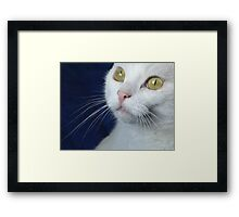 What Big Eyes You Have.... Framed Print