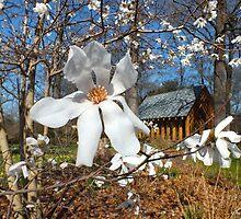 Spring Days Ahead  by hannahsview