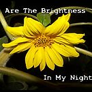 You Are The Brightness In My Nights Sunflower by Jonice