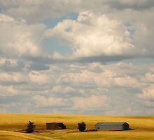 Farmland by Olga Zvereva