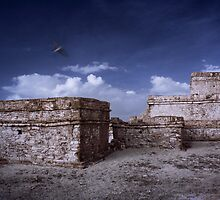Ghost bird of Tulum by Douglas Barnes