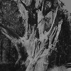 Big Bear Tree by cardinalli