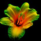 electric flower by thisismesmiling