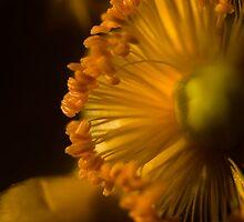 Sun Dial by Jenni77