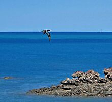 Brown Booby, Roebuck Bay, Broome, Western Australia by Adrian Paul