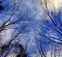 Trees, Dresden by Senthil Nath G T