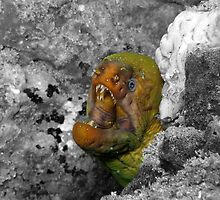 Moray Eel by Scott Rowling