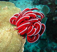 Feather Star by Scott Rowling