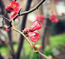 Springtime blossoms by Ms-Bexy