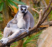 Lemur: give me more beer and a tv remote!!! by lextr