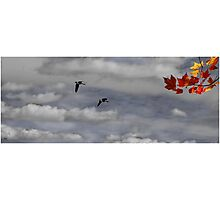 Geese in a Maple Sky Photographic Print