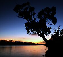 Murray River Sun Rise at Young Husband by Dave  Hartley